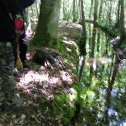 Tir 3 D Rochefort en Yvelines 2013